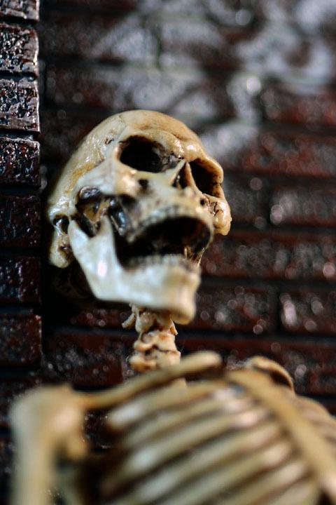 Human Skeleton Body 20 0029