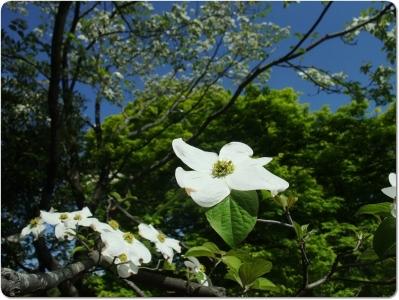mini_1115_hanamizuki_DSCF4385.jpg