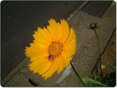 mini_17_2005_DSCF0497.jpg