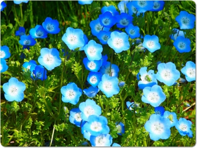 mini_33_nemo_P4291777.jpg