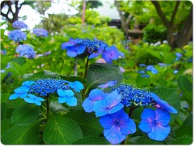mini_41_hondoji_P6182474.jpg