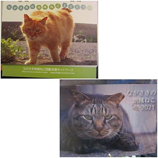cats1_20210105224617859.jpg