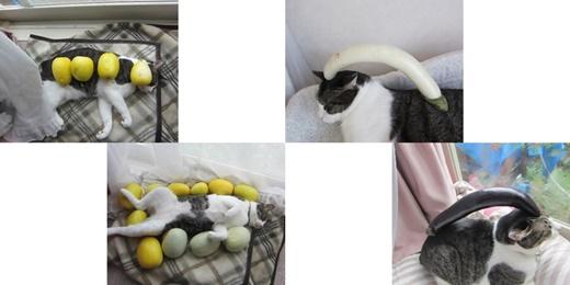 cats2_20201228221836b37.jpg