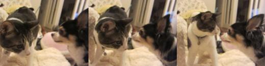 cats_20200407213507650.jpg