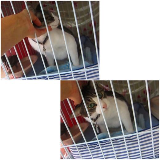 cats_20200507212615145.jpg