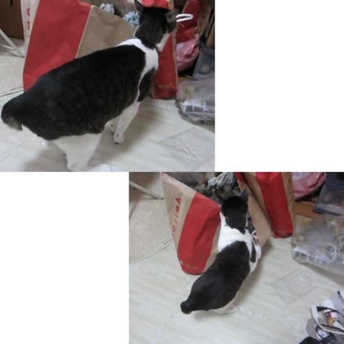cats_202008212139383f7.jpg