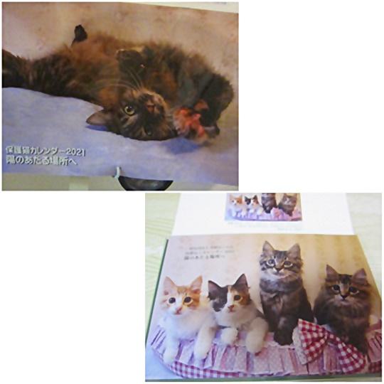 cats_20210105224616882.jpg