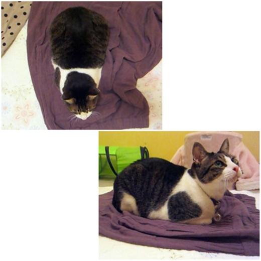 cats_202101182302216eb.jpg