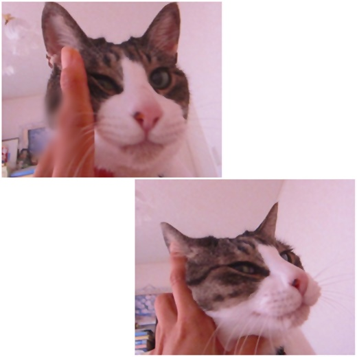 cats_20210201222632b93.jpg