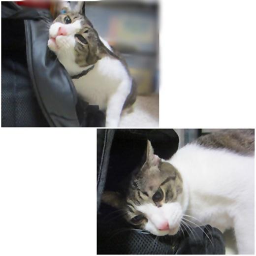 cats_20210227132243291.jpg