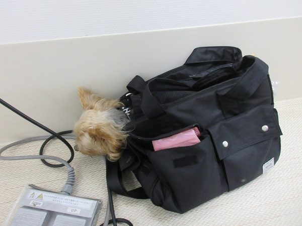 200826up09液検査お耳洗浄終了後のチーン