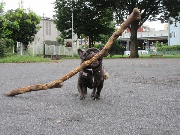 200923up03公園まで来て枝遊び出来たよ