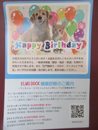 201030up02武蔵お誕生日月無料健診爪切り目的w