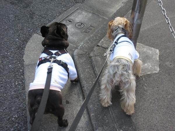 201119up01テオドールさんのおソロのお洋服着てお散歩へ
