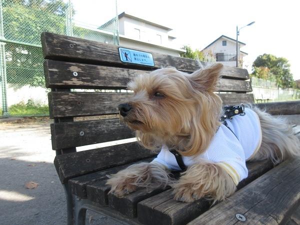 201119up02原っぱ広場のベンチでまったりオヤツタイム