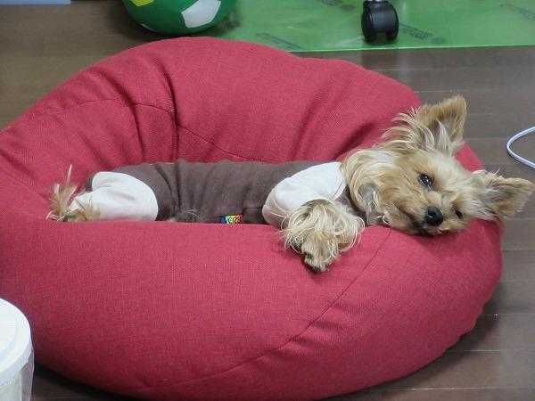 ⑤京太郎お気に入りのパジャマロンパースでくつろぐ武蔵