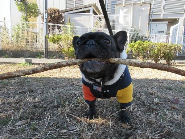 201223up06今日は爺ジとボール遊びより枝遊びの気分だったらしいw
