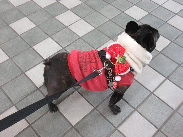 201224up02クリスマス仕様のシュシュ付けてお散歩へ