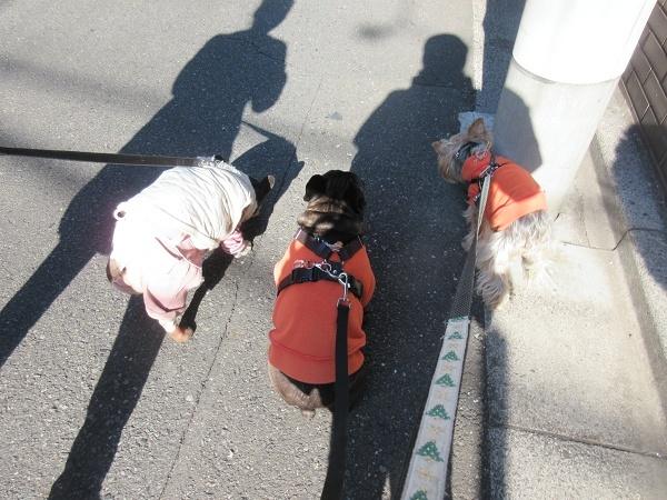 201227up04原っぱ広場でおもちさんと遭遇して一緒に帰って来たよ