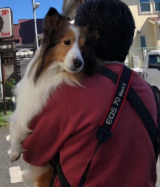 鎌倉散歩3
