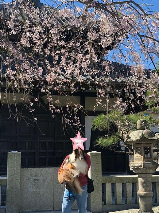 鎌倉散歩7