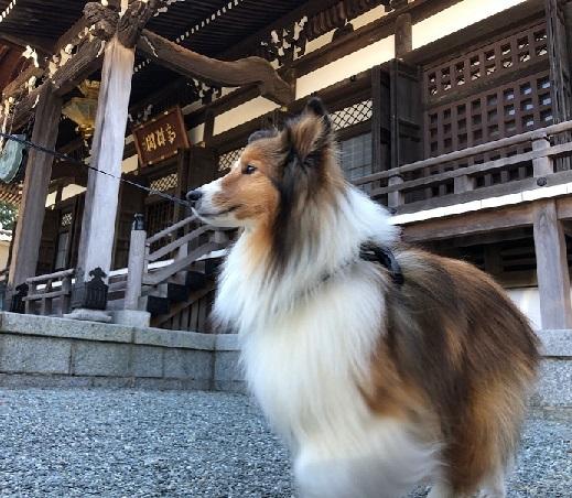 鎌倉散歩90