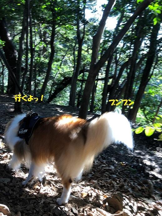 源氏山散歩6
