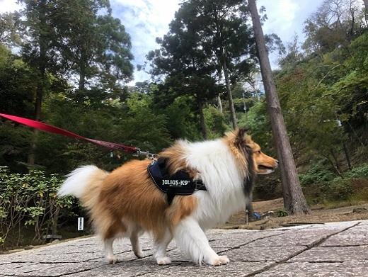 建長寺散歩93