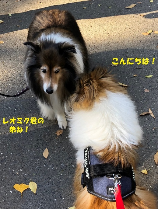 駒沢公園1