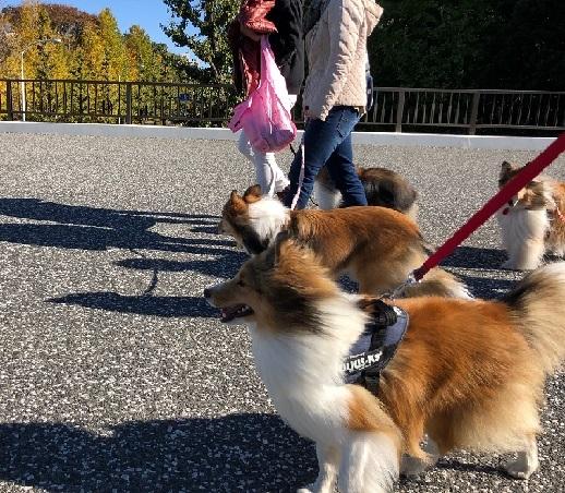 駒沢公園904