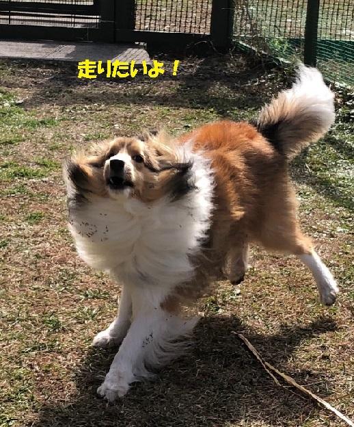 朝霧ラン1