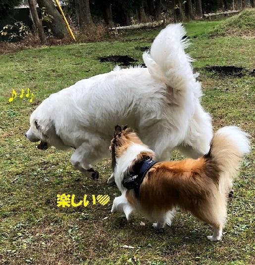 朝霧ラン6