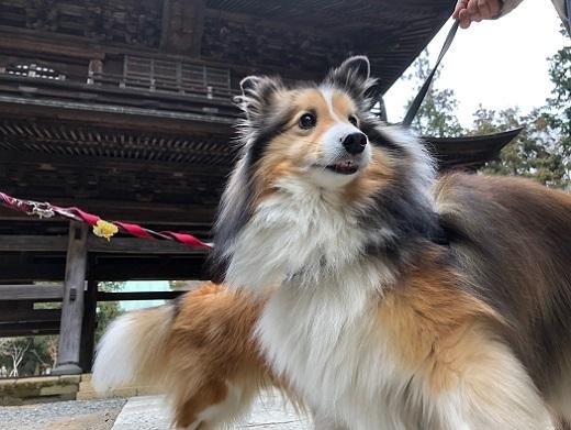 シオンちゃん3