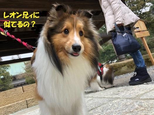 シオンちゃん4
