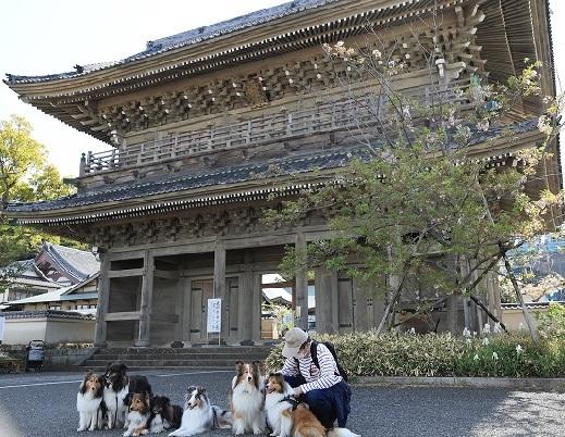 鎌倉散歩0