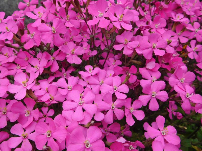 花咲く春0203