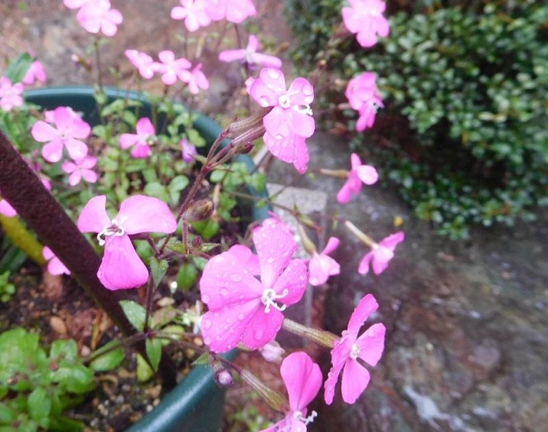 春の雨0204 (2)