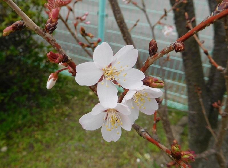 春の雨0204 (4)