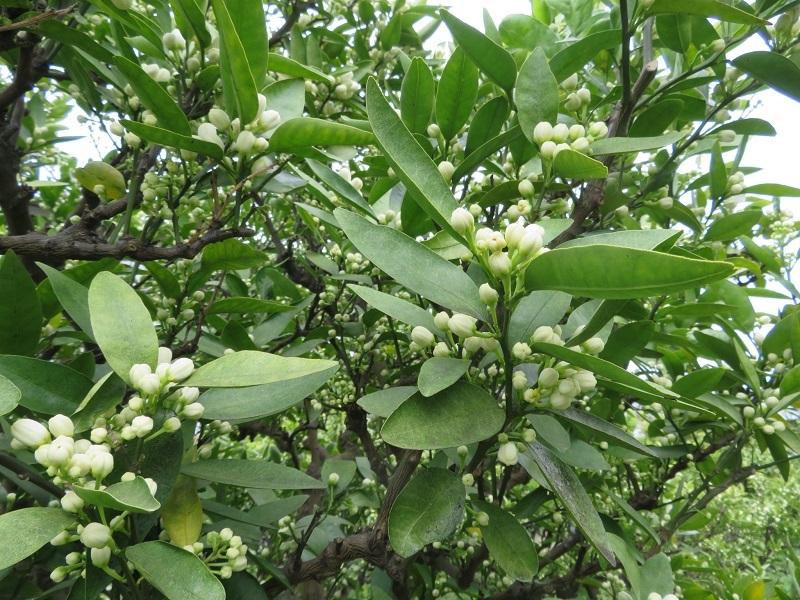 花盛り0204 (2)