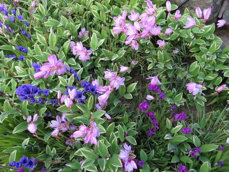 花盛り0204 (3)