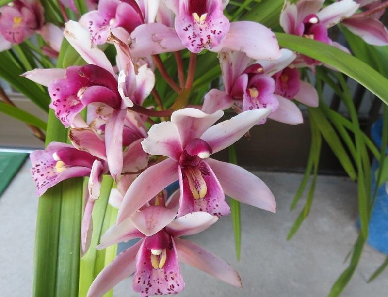 花々とネコ0204 (1)
