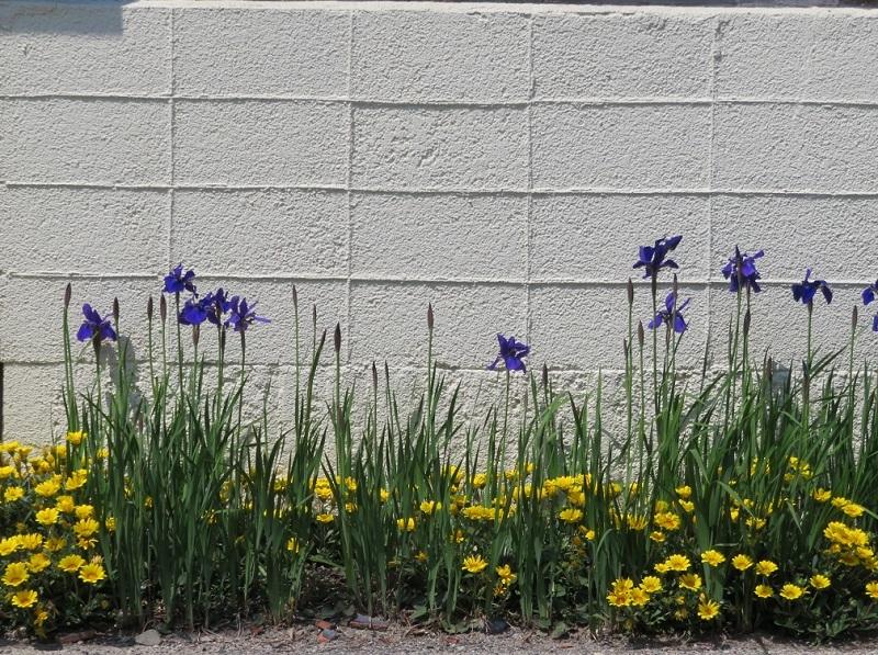 花々とネコ0204 (3)