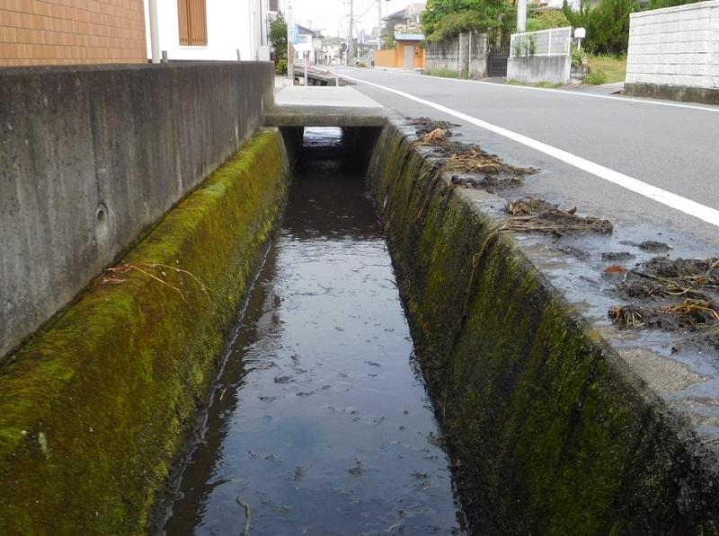 井手掃除0205 (1)