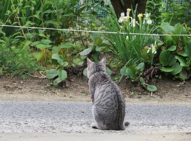 雨上がりの猫0205