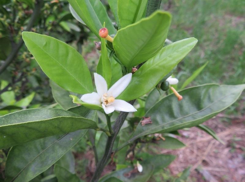 みかん畑の花とネコ0205 (4)
