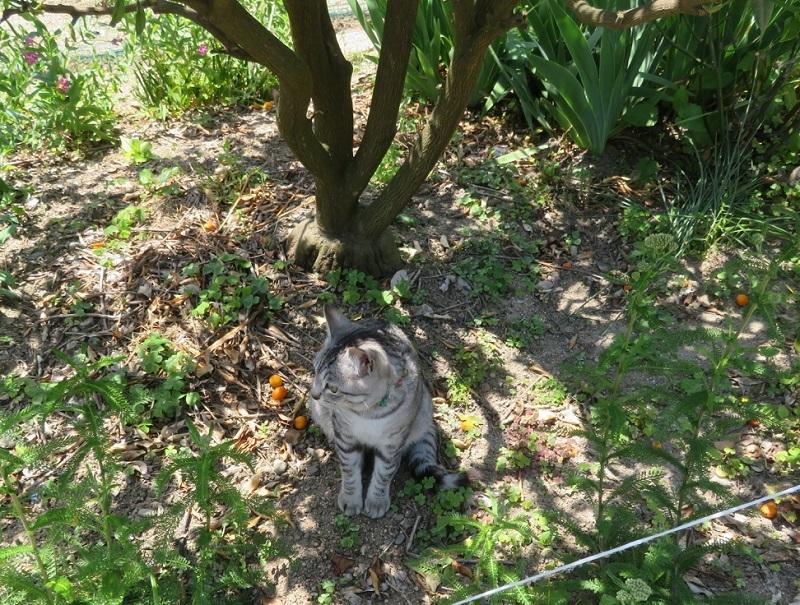 木下ネコ0205