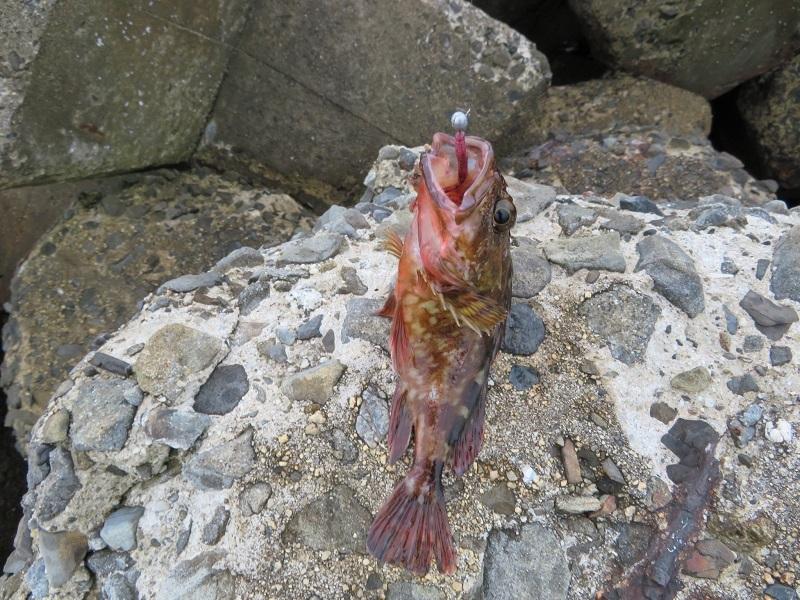 水無月釣り0206 (4)