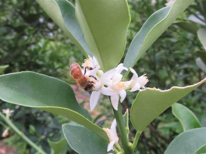 花ミツバチネコ026