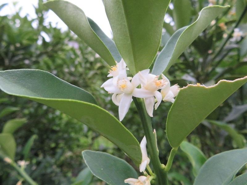 花ミツバチネコ0206 (1)