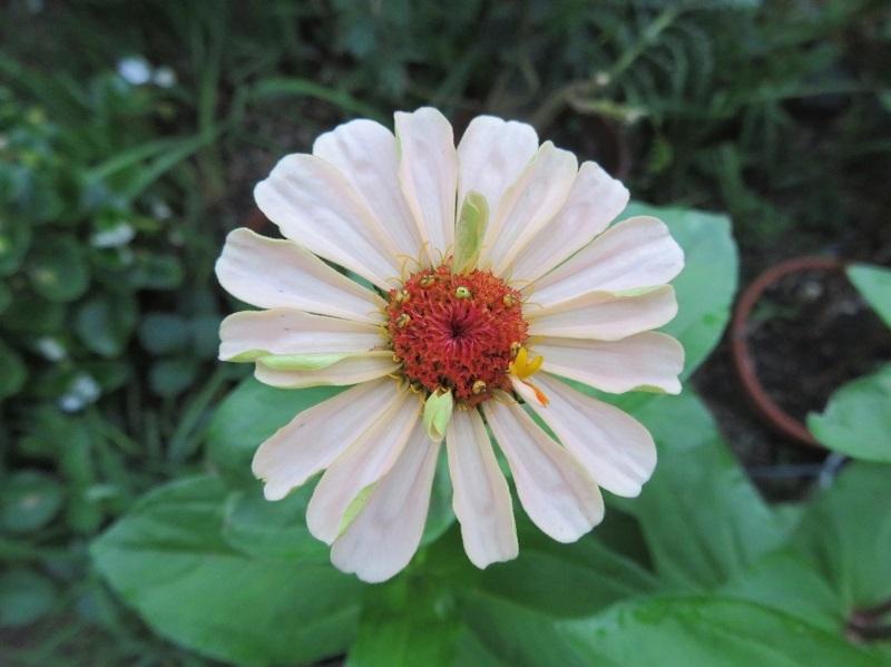 花ミツバチネコ0206 (3)